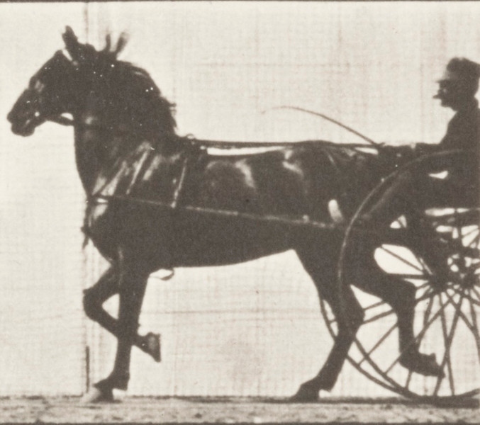 Horse Dercum trotting, harnessed to sulky with driver