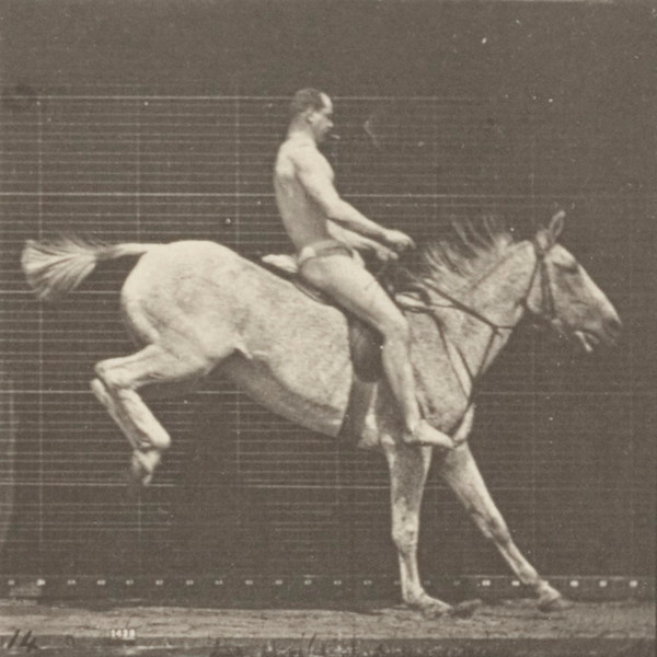 Horse Pandora jumping a hurdle, saddled with nude rider