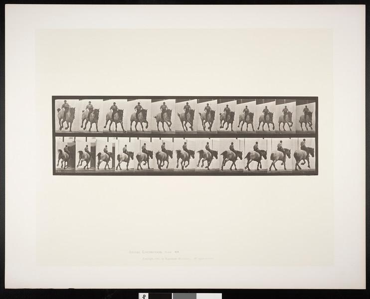 Horse Hansel galloping, bareback with rider