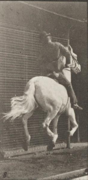 Horse Dan galloping, saddled with rider