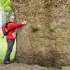 Неохватное дерево