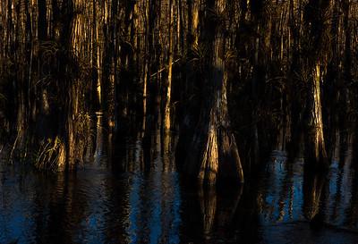 Big Cypress Swamp Walk