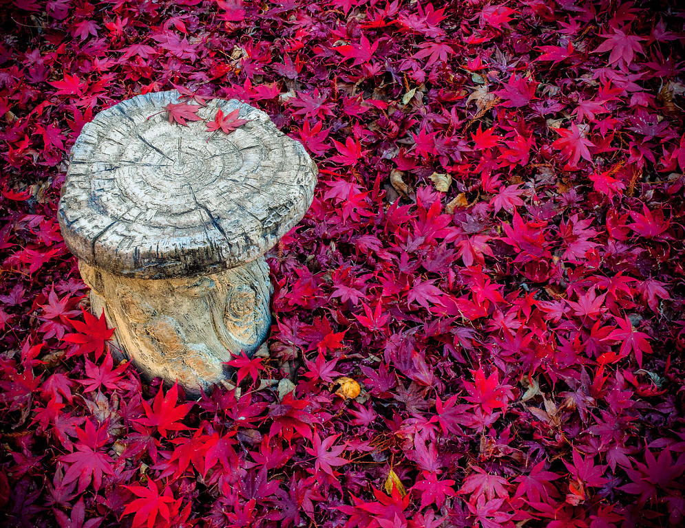 "<center><h2>' Stool & Maple Leaves '</h2>  Gibb's Garden Ballground, GA  Matted 16""x20"", on Luster Photo paper (12 mil)   </center>"