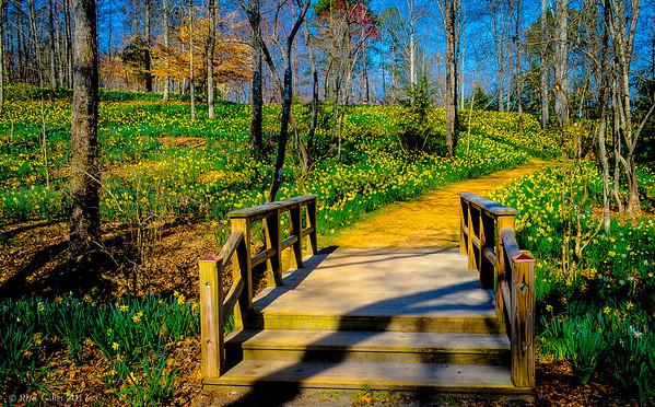 The Bridge to Daffodil Hill