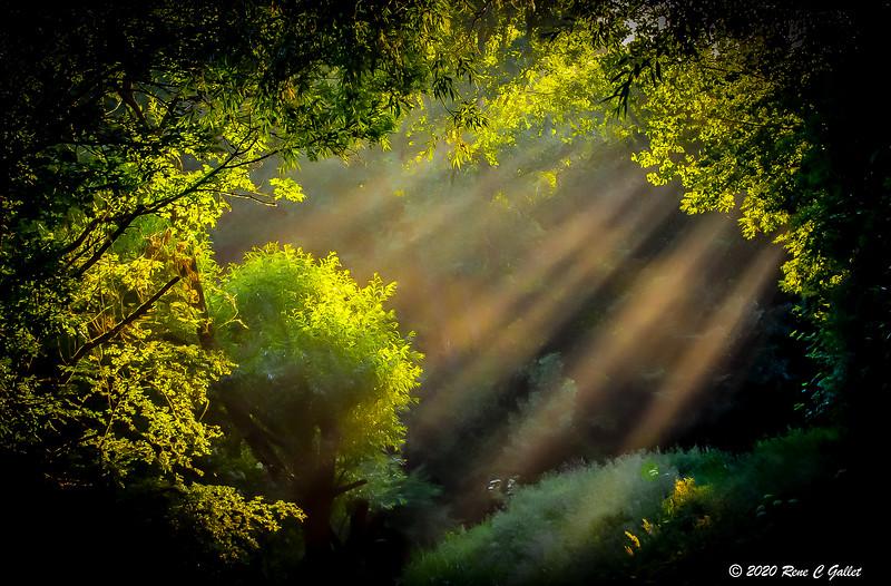 Morning East Light