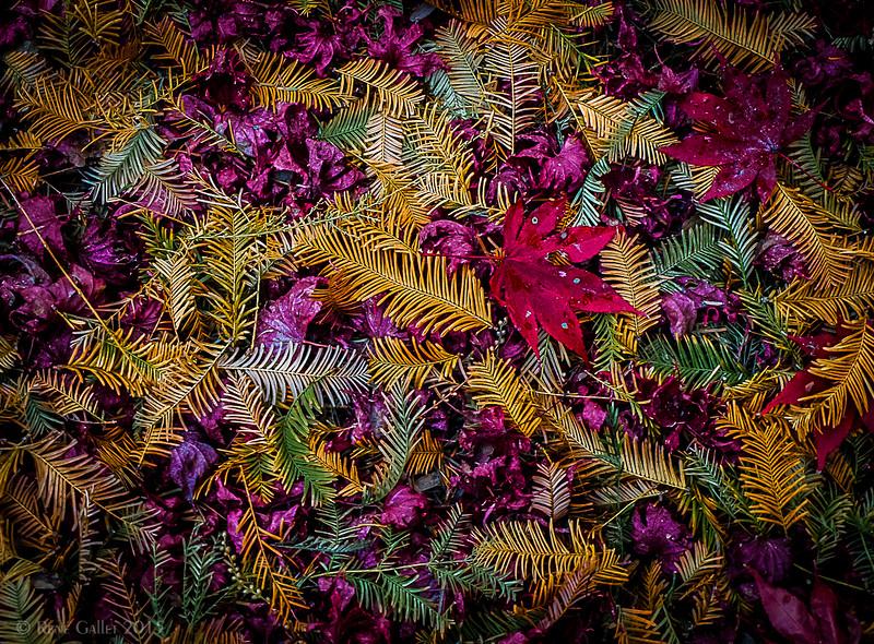 November Forest Floor