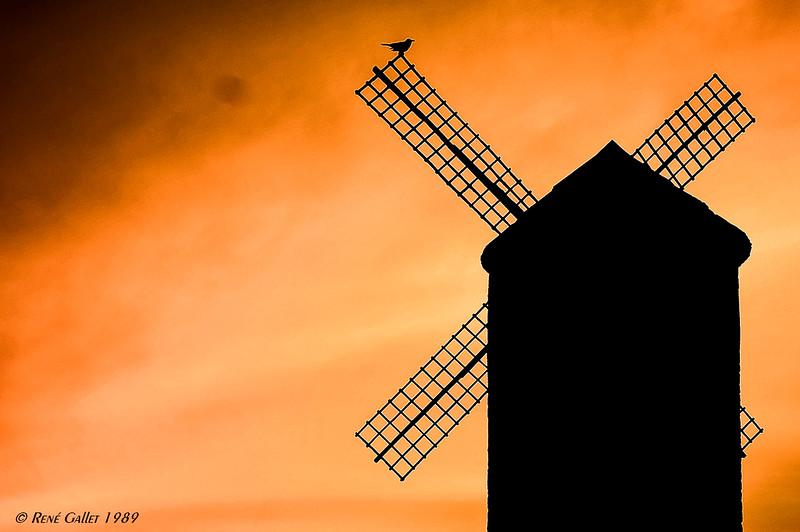 Mill at Dusk - Brugge, Belgium