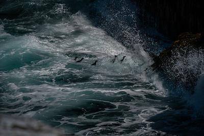 Sea Lion Island - Falklands
