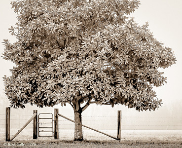 Magnolia Gate