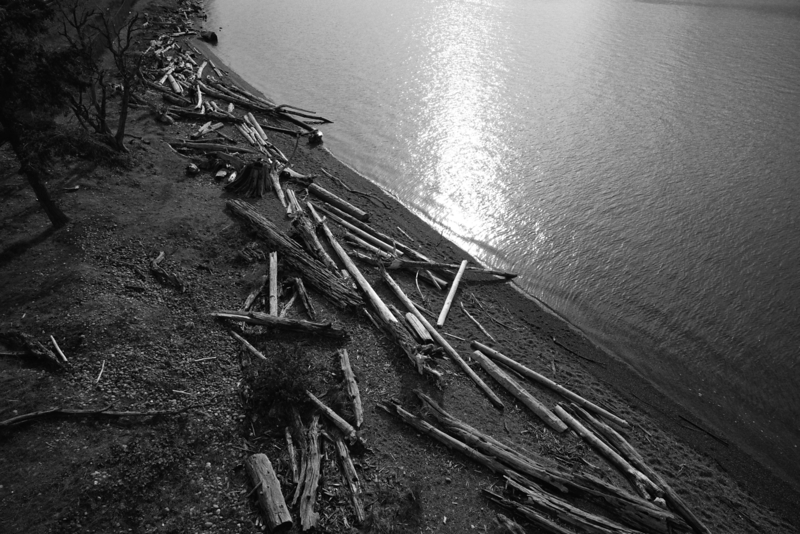 Driftwood - Chambers Creek Park - Tacoma (October 2016)