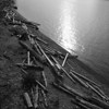 Driftwood - Chambers Creek Park - Tacoma (October 2016)