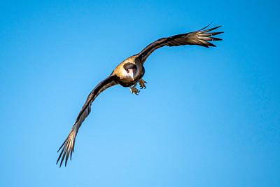 20191202-ASDM_Raptor-Free-Flight-1849