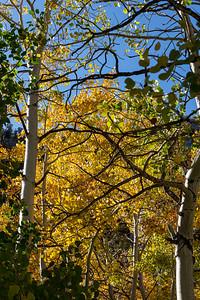 Fall Color near North Lake