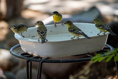 20200726-AutoAreaTest-birds-backyard-2181-AIc-TK7v2-Cl-Vng