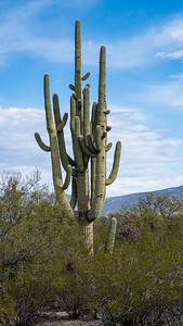 20191231-SNPE-Cactus-Forest-Drive-fwlp-4620
