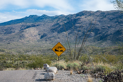 20191231-SNPE-Cactus-Forest-Drive-fwlp-4573