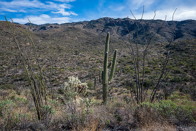 20191231-SNPE-Cactus-Forest-Drive-fwlp-4766