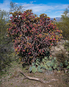 20191231-SNPE-Cactus-Forest-Drive-fwlp-4728