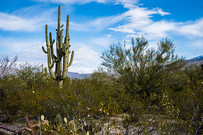 20191231-SNPE-Cactus-Forest-Drive-fwlp-4625