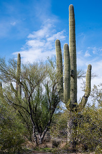 20191231-SNPE-Cactus-Forest-Drive-fwlp-4733