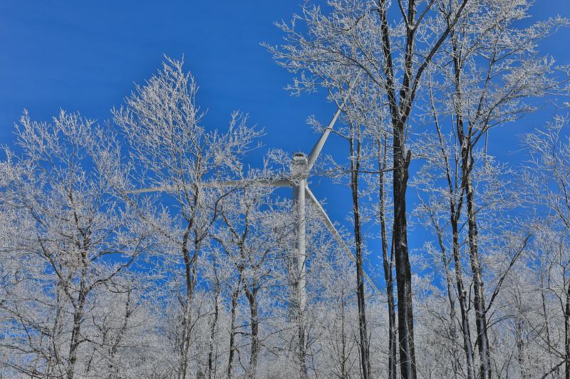 Frozen Winter Trees with Wind Turbine