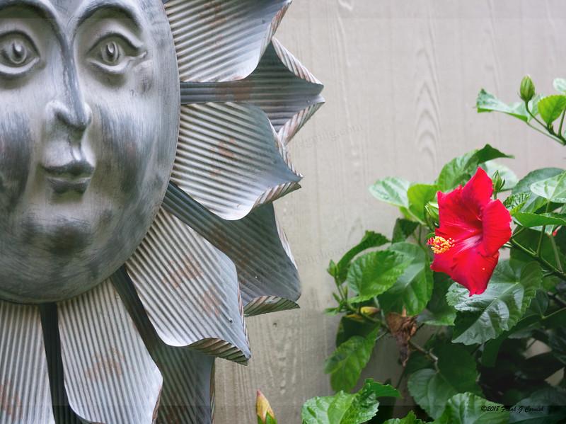Mr Sun's private garden