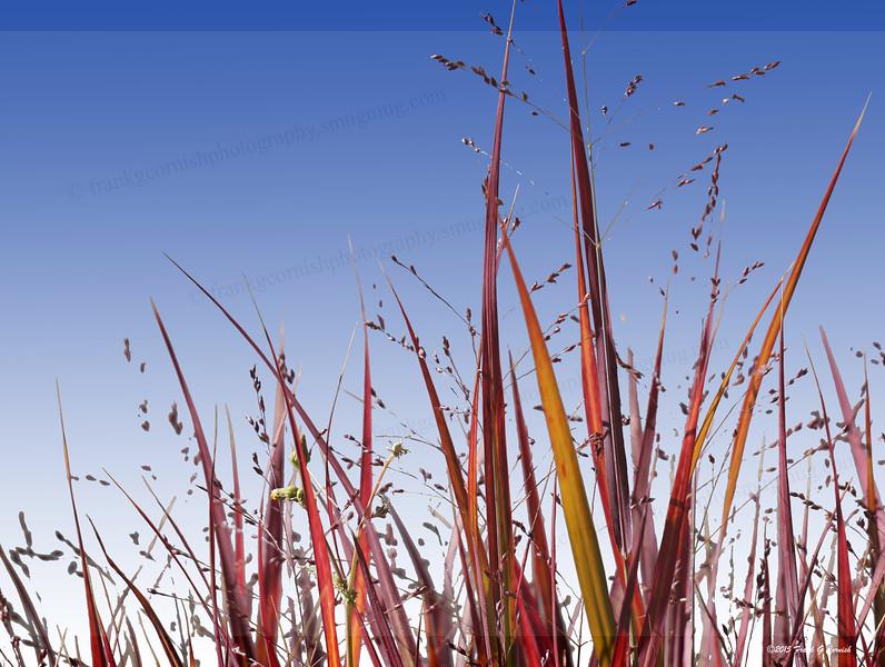 Red grass, Aspen, CO