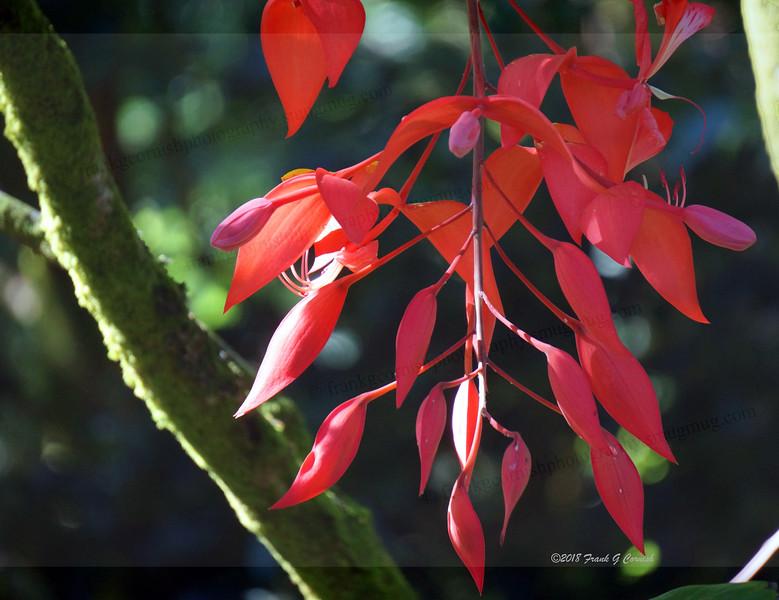 red flower,Ho'omaluhia Botanical Garden,Oahu