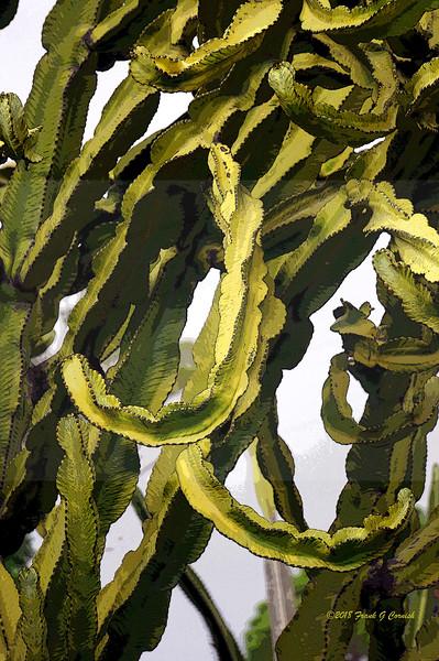 Cacti at Kapiolani Community College, Honolulu, Hi