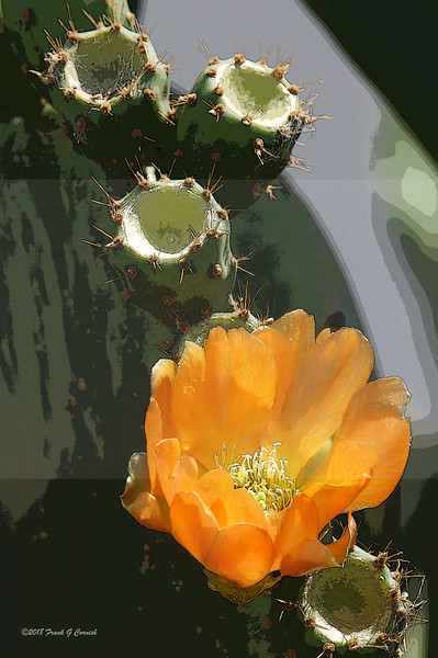 prickly pear blossom with dead sisters
