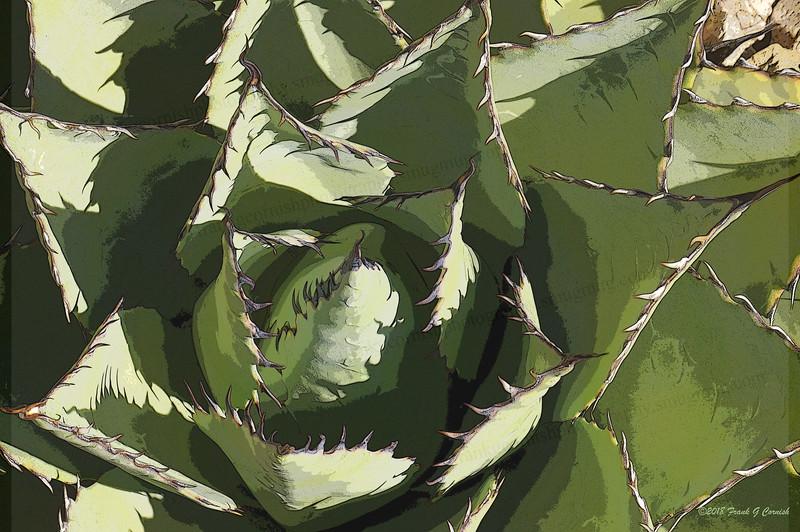 Cacti, Sante Fe Botanical Garden, NM