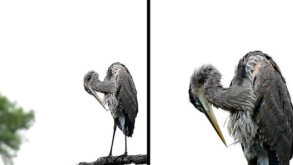 Heron-Split Screen