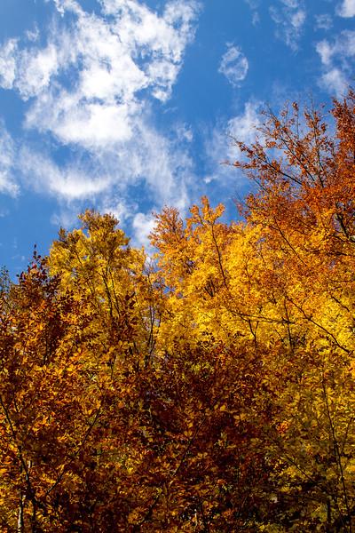 trees-in-autumn