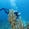 Ira underwater