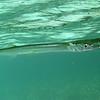 Houndfish