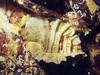 Leafy Hornmouth - Mollusca Phylum