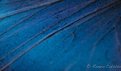 bluemorpho-detail
