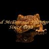 BRAD McDONALD   ROUGH KNOB TAIL GECKO 201607070003