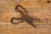 Antique sheep wool shears scissors rusted