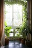 Backlit in a house room with plants