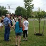 Beginning of tree gathering