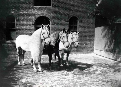 The Neversink Fire Company horses at the rear of one of the company's buildings. Photographer unknown, scanned by Anthony Miccicke.