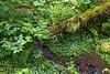 Cavenphoto_170601_1700