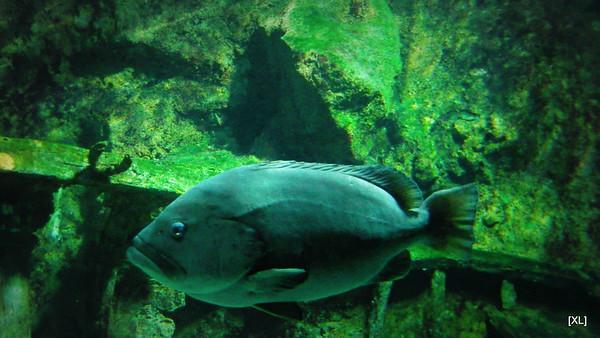 7/ aquarium de la Réunion (St-Gilles)