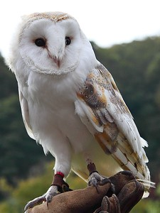Owl 22