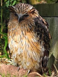 Owl 11