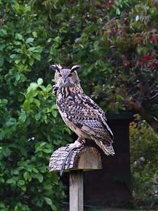 Owl 25