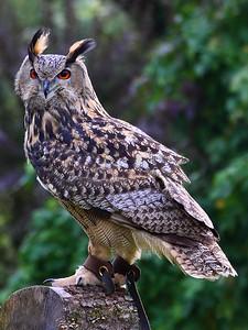 Owl 27