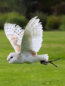 Owl 21