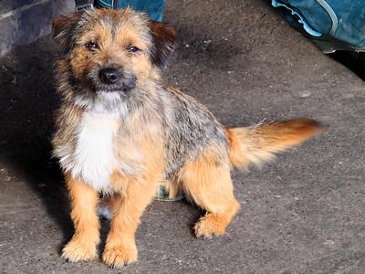 Scruffy Little Dog!